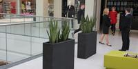 Aranżacje galerii handlowych z zieloną oazą w tle